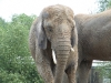 elephant-hq-pictures-and-wallpapers-025