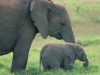 elephant-hq-pictures-and-wallpapers-027