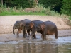 elephant-hq-pictures-and-wallpapers-029
