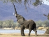 elephant-hq-pictures-and-wallpapers-030
