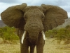 elephant-hq-pictures-and-wallpapers-032