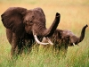 elephant-hq-pictures-and-wallpapers-033