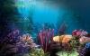 Finding Nemo HD Wallpaper