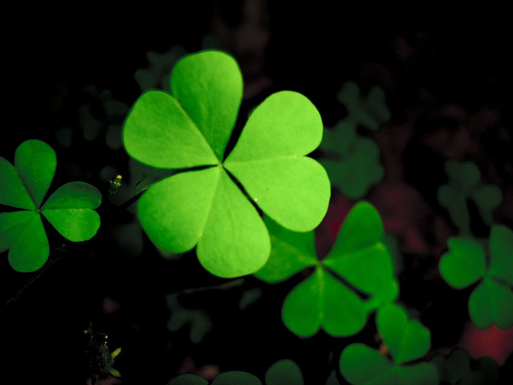 green-clover-hq-wallpapers-05