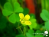 green-clover-hq-wallpapers-04