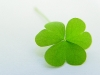 green-clover-hq-wallpapers-06