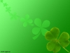 green-clover-hq-wallpapers-08