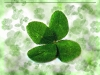 green-clover-hq-wallpapers-09