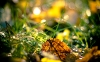 macro-nature-wallpapers-03