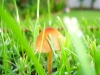 mushrooms-hq-pictures-and-wallpaper-01