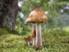 mushrooms-hq-pictures-and-wallpaper-02