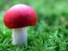 mushrooms-hq-pictures-and-wallpaper-04