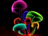 mushrooms-hq-pictures-and-wallpaper-08