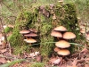 mushrooms-hq-pictures-and-wallpaper-12