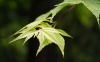 Nature Leaves HD Wallpaper