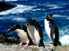 penguins-hq-pictures-and-wallpapers-544