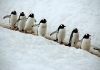 penguins-hq-pictures-and-wallpapers-545