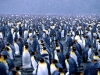 penguins-hq-pictures-and-wallpapers-546
