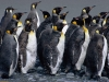 penguins-hq-pictures-and-wallpapers-548