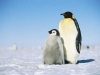 penguins-hq-pictures-and-wallpapers-551