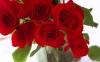 rose_009004