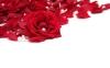 rose_009010