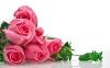 rose_009012