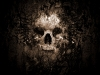 skull-hq-pictures-and-wallpaper-241