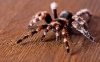 spider-hd-pictures-and-wallpapers-03