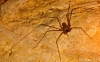 spider-hd-pictures-and-wallpapers-05