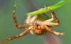 spider-hd-pictures-and-wallpapers-07