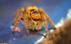 spider-hd-pictures-and-wallpapers-08