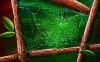 spider-hd-pictures-and-wallpapers-11