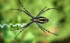 spider-hd-pictures-and-wallpapers-12