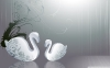 swan-hd-wallpapers-04