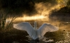 swan-hd-wallpapers-05